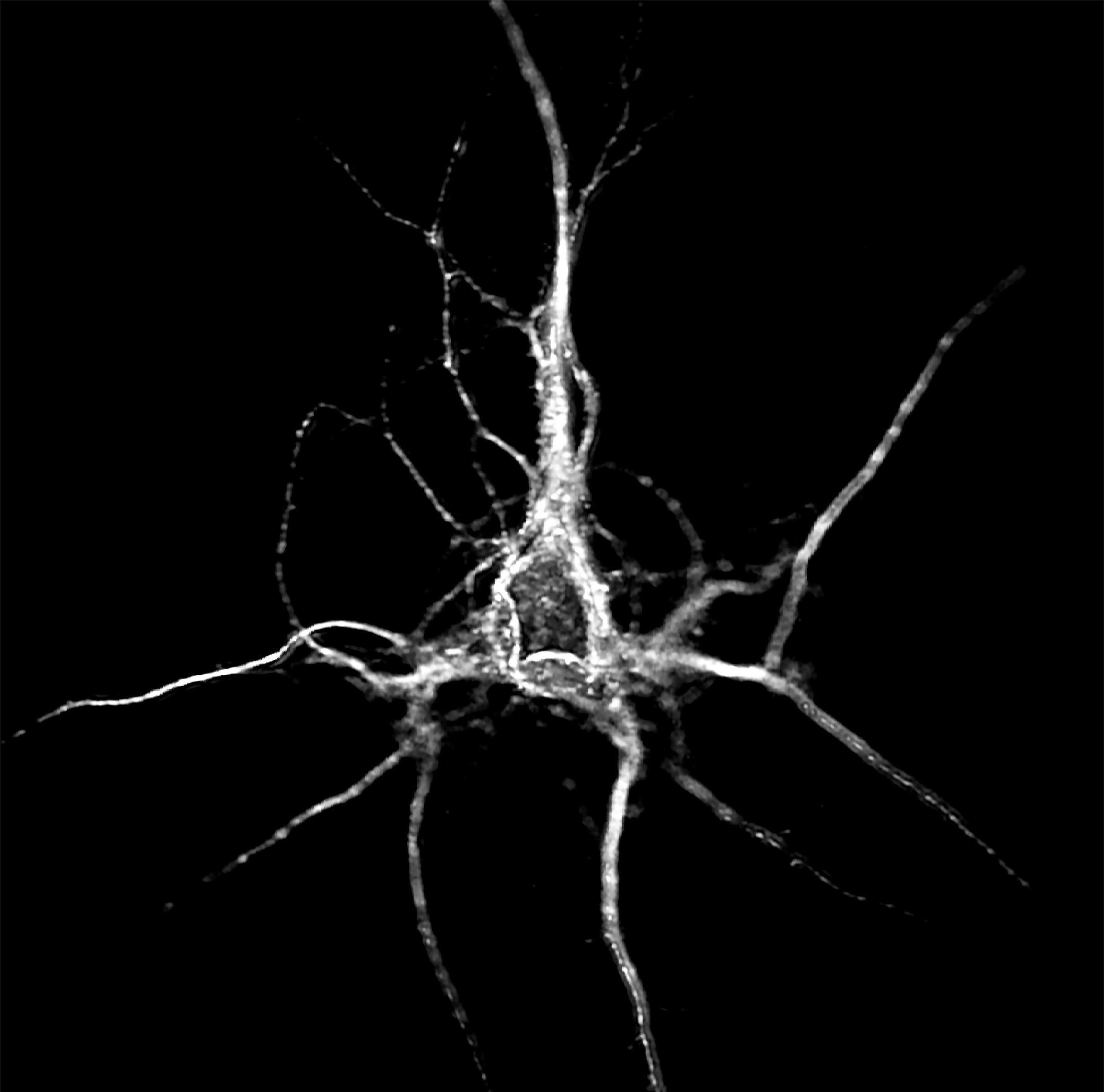 tranzacționarea rețelelor neuronale de roboți