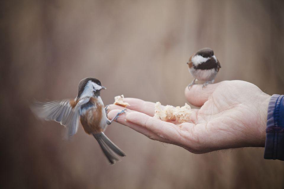păsările bogate fac bani