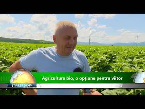 Tsagaye a plantat o mică bucată de iarbă sălbatică la ferma sa din Jeldu | OPȚIUNI ȘTIRI