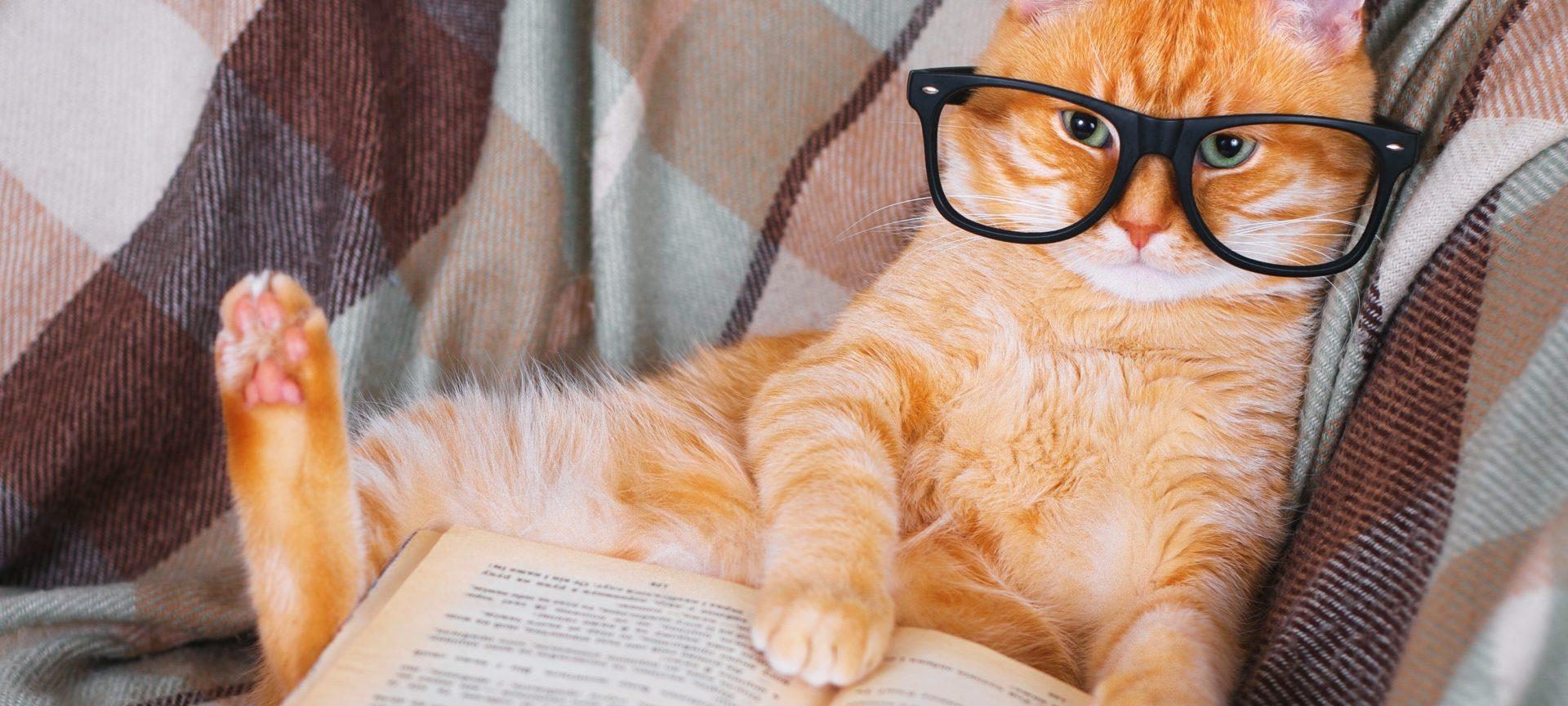 opțiuni de pisică)
